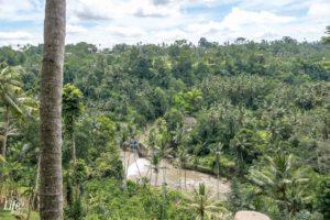 Bali Swing Aussicht