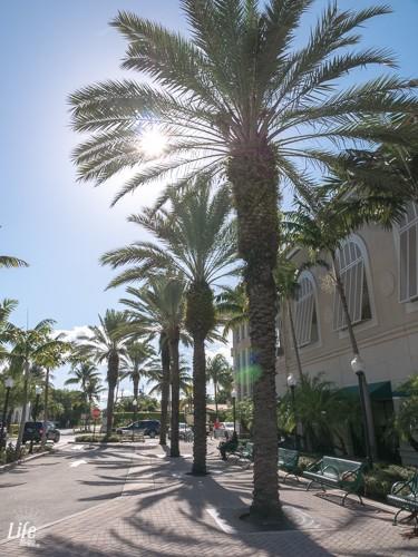 Palmen Miami