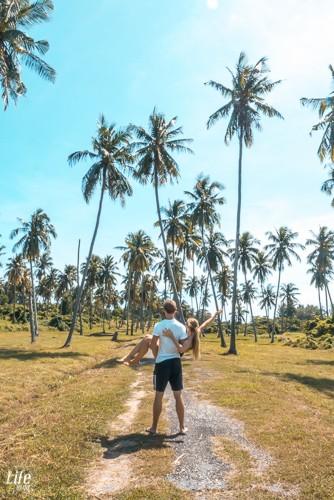 Palmen auf Phuket