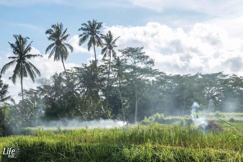 Wundervolle Natur auf Bali