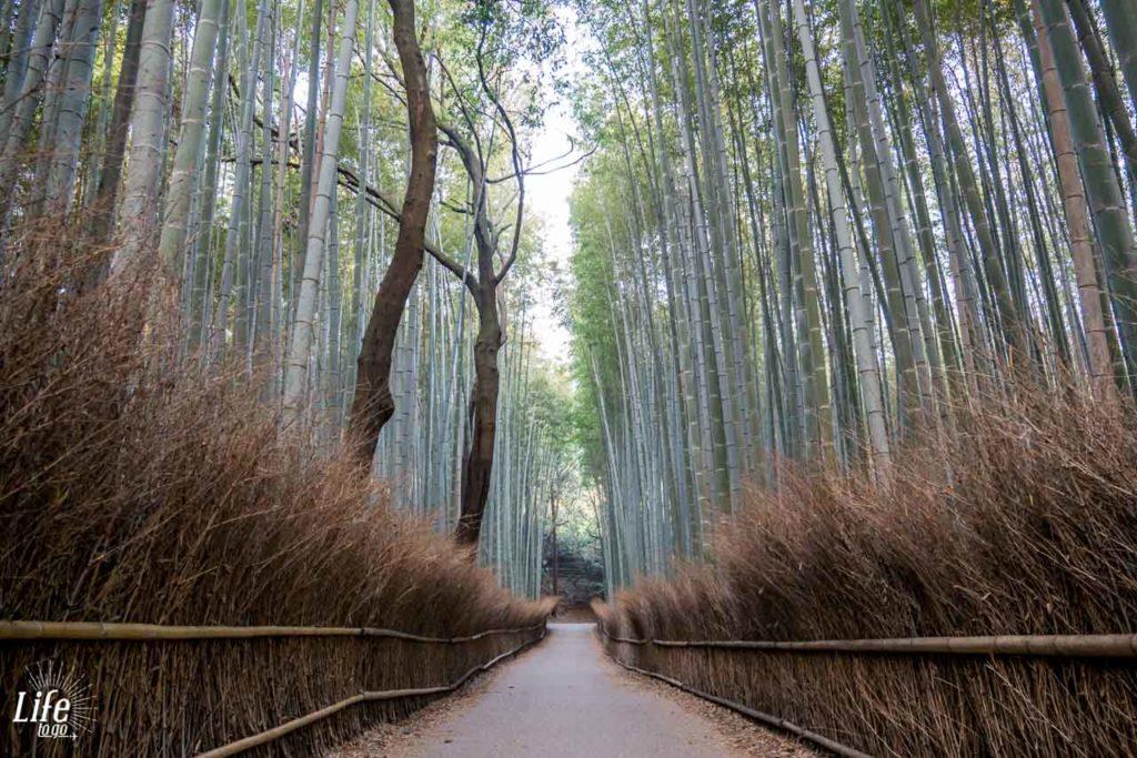 Kyotos Bambus Wald