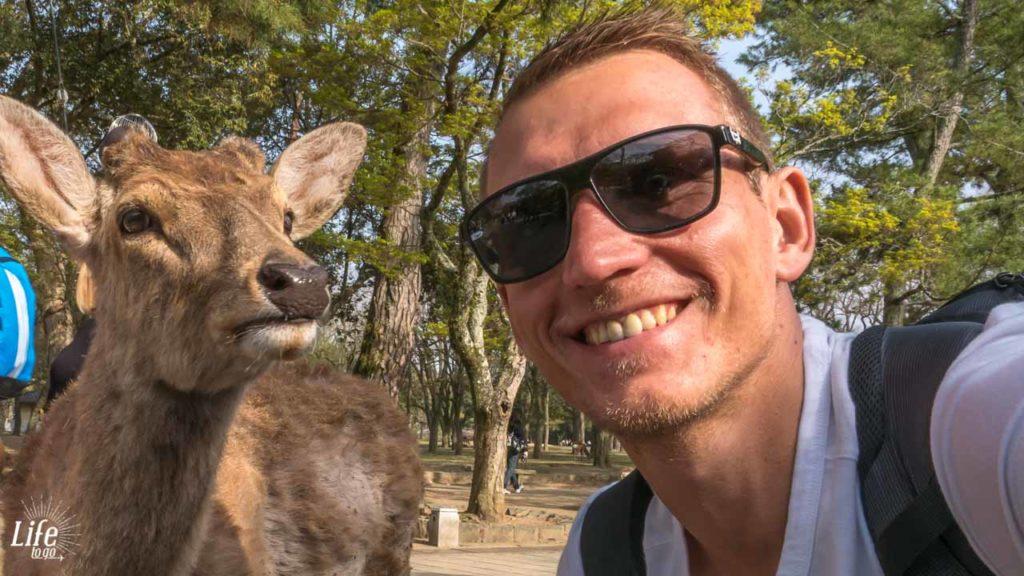 Reh Selfie Nara Park Hirsch