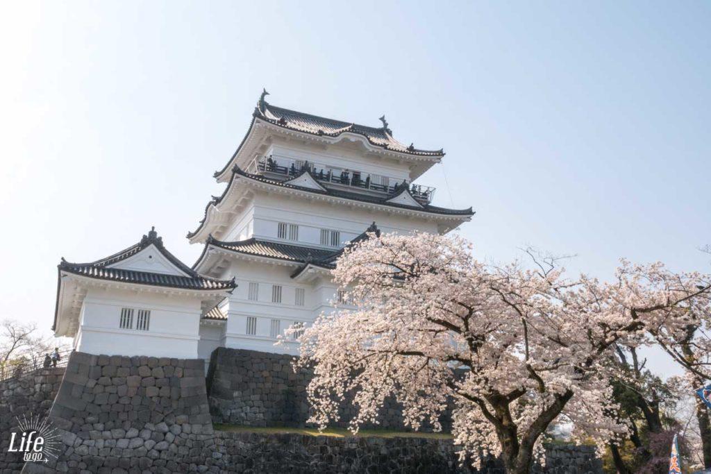 Odawara Castle Kirschblüte Japan