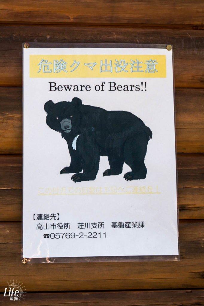 Wilde Bären in Japan