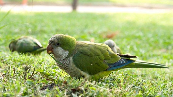 Parc de la Ciutadella Papagaien
