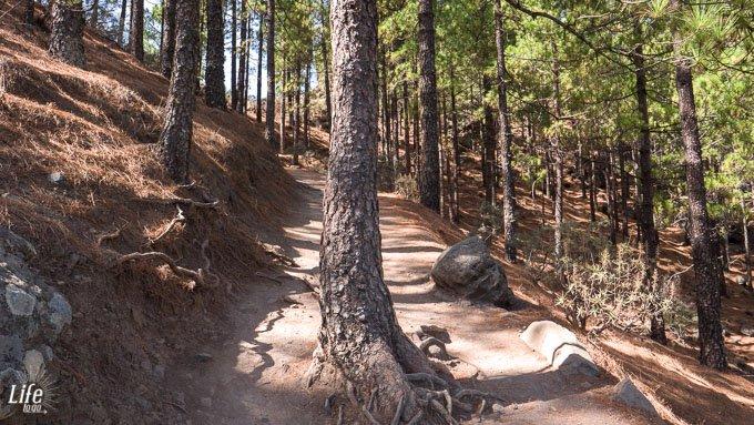 Roque Nublo Wanderweg