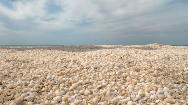 Shell Beach Australien