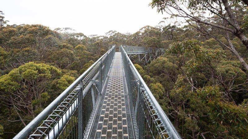 Treetop Walk Valley of the Giants Westaustralien