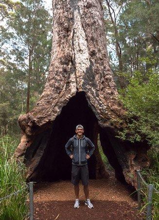Valley of the Giants Westaustralien