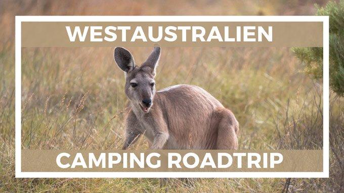 Reisetipps Westküste Australien und Känguru