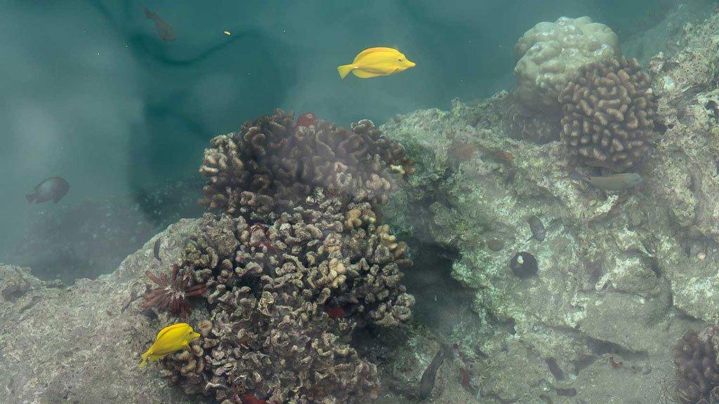 Bunte Fische Hawaii Honolulu