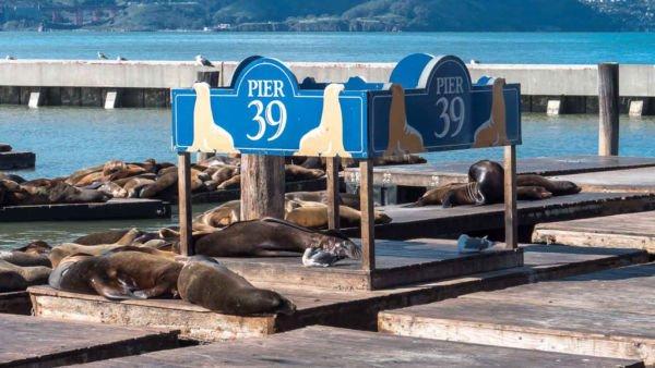 Pier 39 Seelöwen