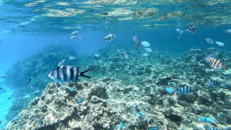 Unterwasserwelt Bora Bora