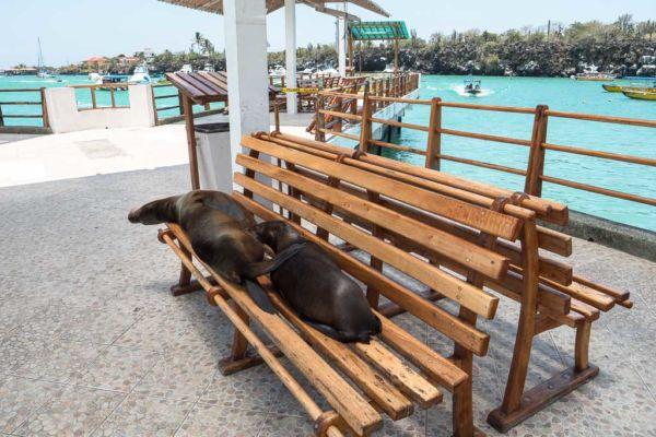 beste Reisezeit Galapagos Dezember bis Mai