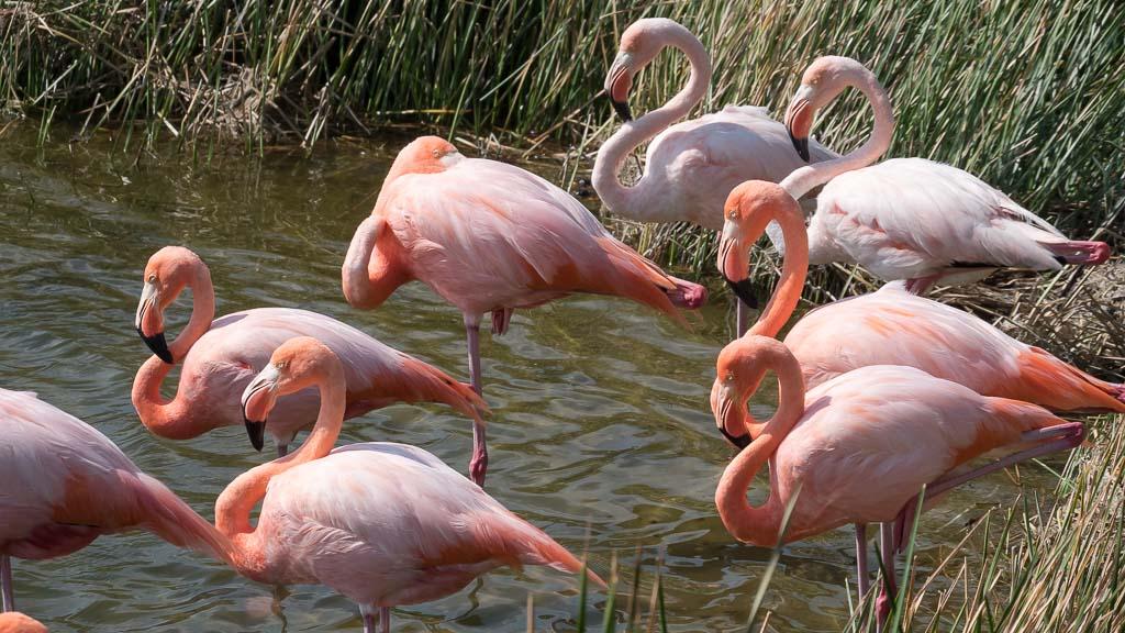 Flamingos Galapagos Inseln Reisetipps