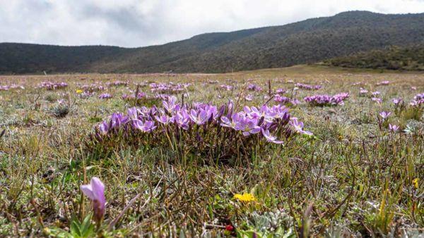 Flora Cotopaxi Nationalpark bunte Blumen und Pflanzen