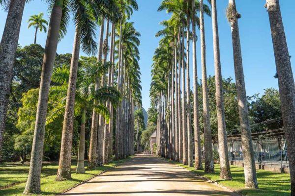 Rio de Janeiro Sehenswürdigkeiten Botanischer Garten Königspalmen Allee