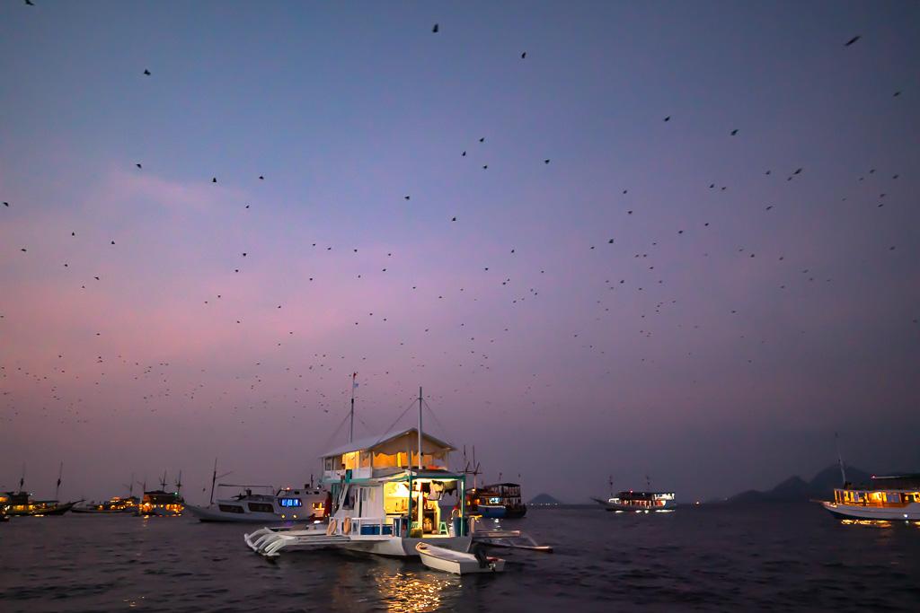 Kalong Island Flughunde Fox Island