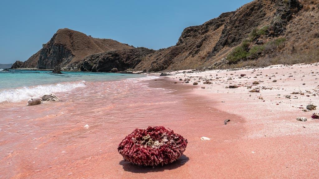 Koralle Pink Beach Komodo