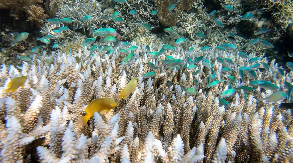 bunte Fische Angel Island Komodo Nationalpark