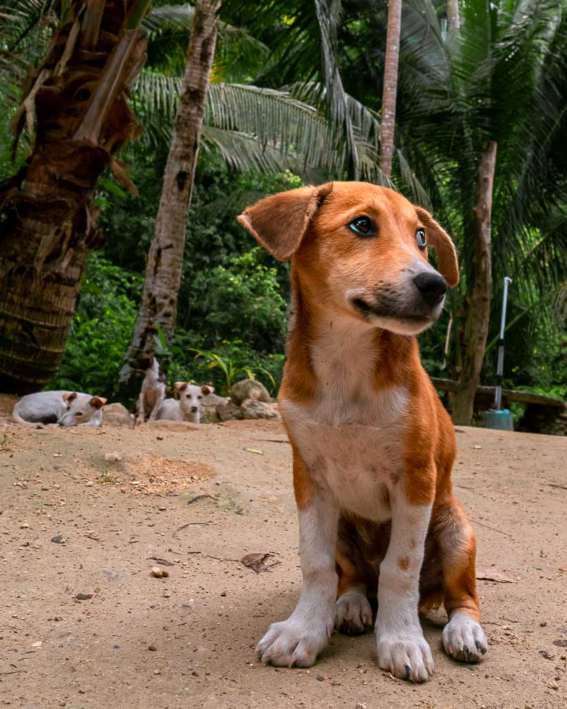 Kawasan Falls Hunde Cebu