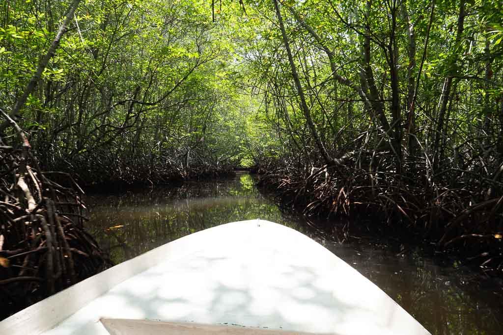 Mangroven Nusa Lembongan Tour