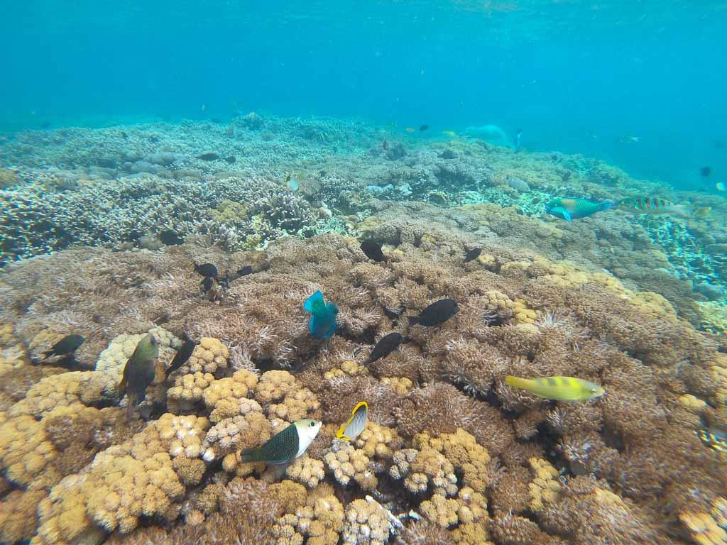 Nusa Lembongan schnorcheln Nusa Penida Tour