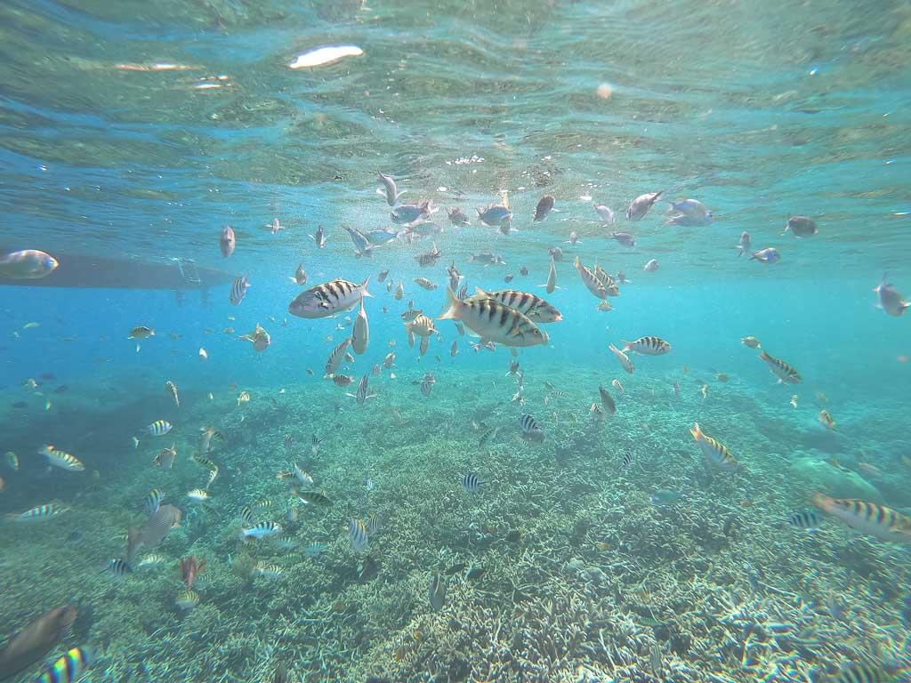 Nusa Lembongan Schnorcheltour
