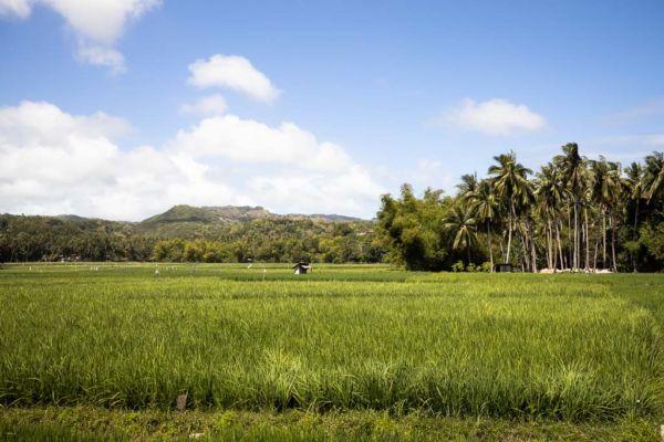 Reisfelder Siquijor