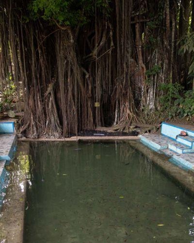 Siquijor Sehenswürdigkeiten Old Enchanted Balete Tree Fischbecken